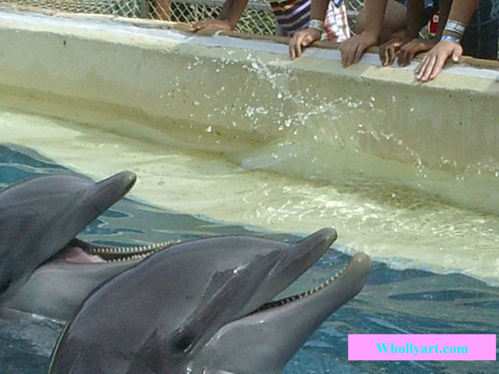 Dolphins with open mouths