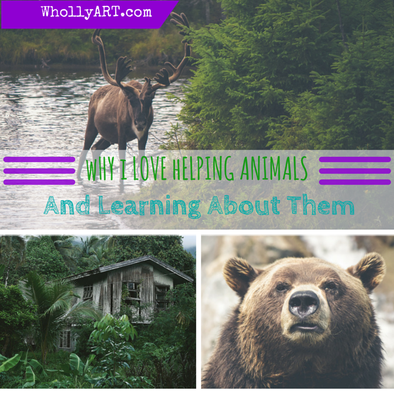 Why I love helping animals and learning about them - WhollyART