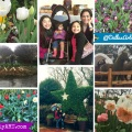 Spring at Dallas Arboretum Whollyart