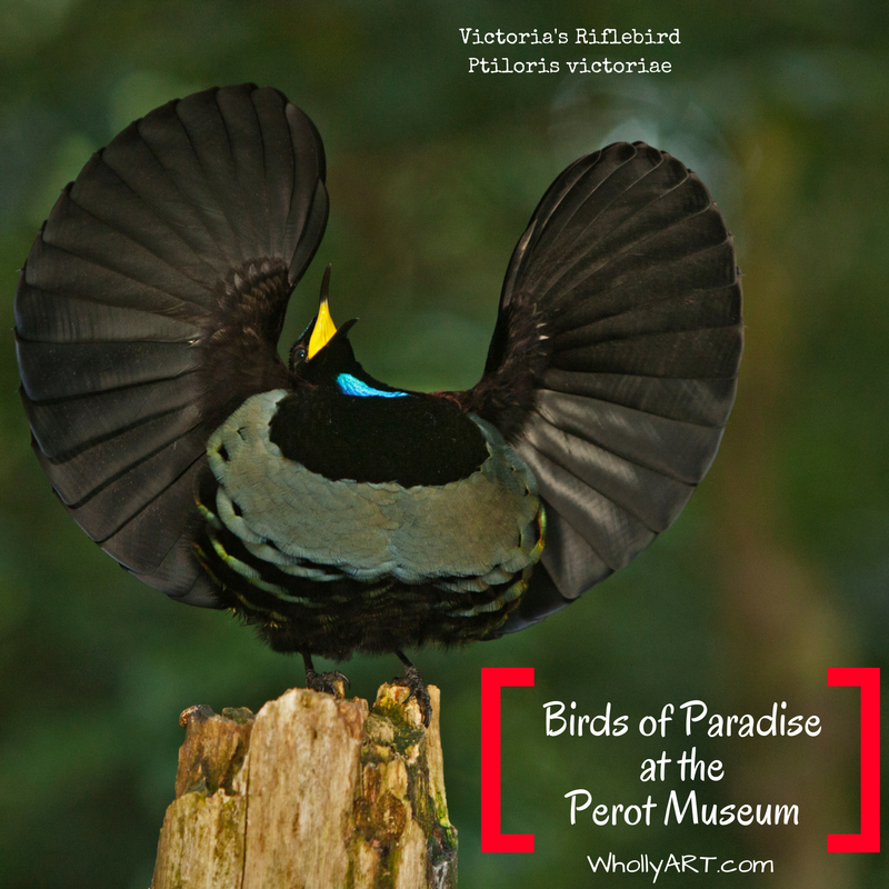 Birds Of Paradise At The Perot Museum