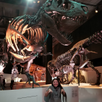 Visit Houston Museum Of Nature And Science Dinosaur T-Rex